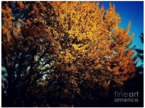 Gold on Gold - Color Square Autumn Photo by Frank J Casella